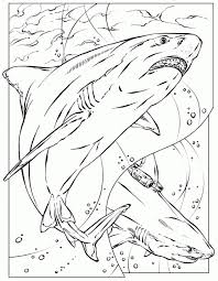 Small Picture Realistic Coloring Page Of Shark For Adults Printable Animal