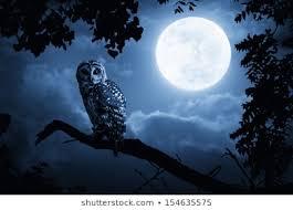 Night <b>Owl Moon</b> Images, Stock Photos & Vectors | Shutterstock