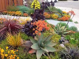 Small Picture Drought Tolerant Landscapes Drought resistant landscaping Lawn