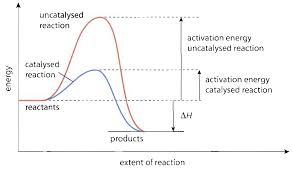 Reaction Rates Chemical Equilibrium Role Catalysts Catalyst