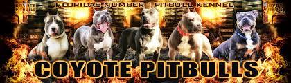 coyote pitbulls