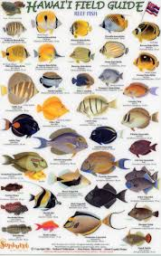 Fish Of Hawaii Hawaii Field Guides Reef Fish 1 Small