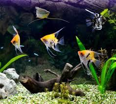 Bildergebnis für bilder aquarium fische
