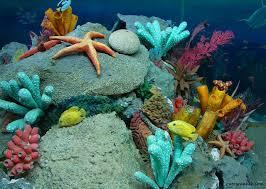 best ideas about beautiful sea creatures ocean 17 best ideas about beautiful sea creatures ocean creatures ocean life and underwater creatures