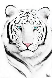 white tiger with blue eyes tattoo. Contemporary Eyes For White Tiger With Blue Eyes Tattoo S