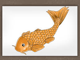 koi fish drawing step by step. Delighful Step Inside Koi Fish Drawing Step By