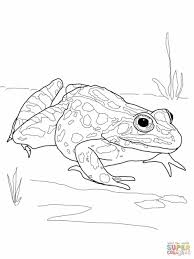 Small Picture Pages Eyed Tree Frog Coloring Page Free Printable Pages Mickey