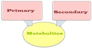 Flow Chart Of Primary And Secondary Data Difference Between Primary Metabolites And Secondary