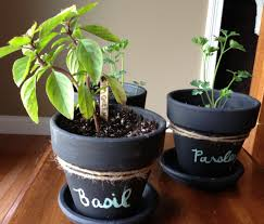 wellness inspired gift idea chalkboard potted plants herbs love well live well