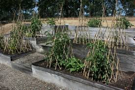 Uses Of Kitchen Garden Garden Design Garden Design With Hog Panel In A Raised Bed To