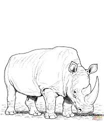white rhino coloring