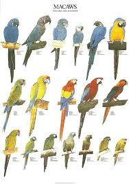 Bird Size Chart Ladygouldianfinch Com Bird Posters Beautiful Birds Bird