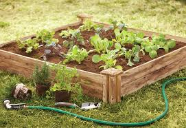 Image result for raised bed