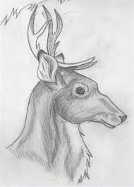 Cool Easy Animal Drawings Cool Animal Sketches Cypress