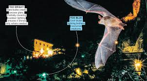 Are Bats Blinded By Light The Dark Side Of Light Physics Article For Students