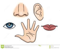 Resultado de imagen de Los cinco sentidos