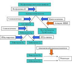 Аспириновая бронхиальная астма Википедия Патогенез править править код