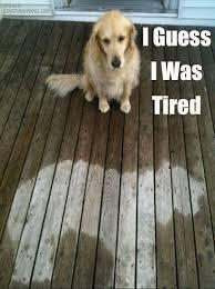 I guess I was Tired dog meme, too cute! | Adorable Memes ... via Relatably.com