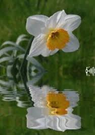 narcissus and the lake narcissism love and other related evils  source