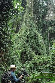 a last unexplored place on earth original essay by douglas preston the expedition proceeds into the jungle