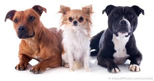 Dog Scientific Classification Chart Scientific Classification Of Pet Dogs