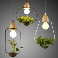 Image Wood Slice Sedum Hanging Lights Pinterest 147 Best Nature Inspired Lighting Images In 2019 Hanging Lights