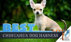 Voyager Harness Size Chart 6 Best Dog Harnesses For Chihuahuas In 2019