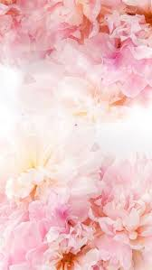 Pin by shagufta khawar on wallpapers in 2020 flower phone. Flower Flower Background Iphone Flower Phone Wallpaper Flower Backgrounds