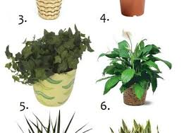 Plant Awesome Cat Safe Houseplants 93 For Your Trends Design
