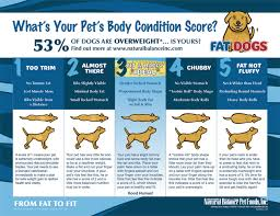 Is Your Pup In The Best Shape They Could Be Heres A Chart