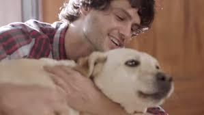 Bud Light Dog Driving Commercial Budweiser Dog Commercial Goes Viral Makes Us Whimper