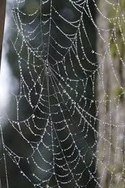 Image result for spiders webs in frost and sun