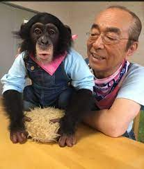志村 動物園 ツイッター