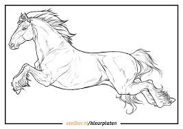 Kleurplaat Paard Download Gratis Paarden Kleurplaten Eendiernl