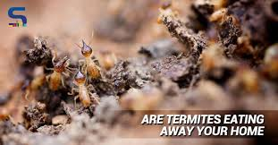 at some point or the other we have all been victims of these tiny creatures