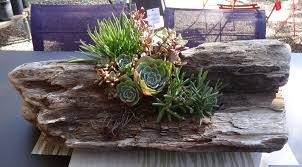 succulents in driftwood tended.wordpress.com