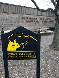 Image of: Anne Burns Ingham County Animal Control Shelter To Construct New Building Over Next Years Spartan Newsroom Michigan State University Ingham County Animal Control Shelter To Construct New Building