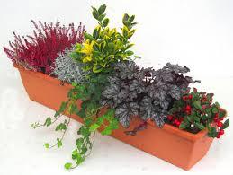 Bepflanzter Balkonkasten 80 Cm Wintergr N Im Bew Sserungskasten