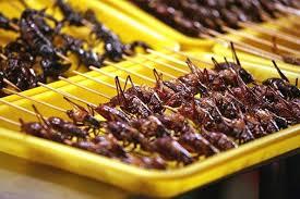Bildresultat för äta myror djungelboken