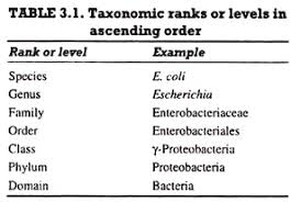 Bacterial Taxonomy Meaning Importance And Levels