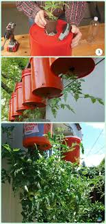 it s basically a hanging planter with a hole at the bottom so the tomatoes grow upside down eliminating the need