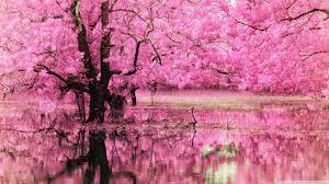 Pink Tree Desktop Wallpapers ...