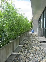 Bambou En Pot Brise Vue Naturel Et D Co Sur La Terrasse Bambou