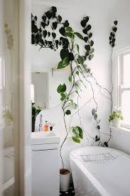 Best Inspirations To Make Indoor Wall Climbing Plants  DecOMGClimbing Plants Indoor