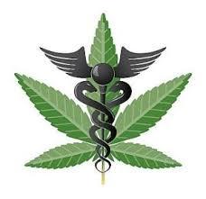 persuasive essay danny s portfolio persuasive essay san diego medical marijuana