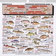 Fishermans Freshwater Fish Chart 8 Buy Online In Uae