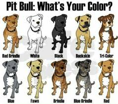 Pitbull Dog Years Chart Pitbull Breeding Color Chart Pitbull Puppies