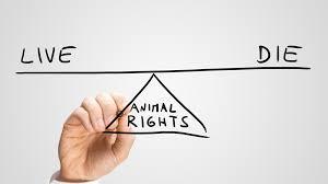 animal testing benefits essay help   essay for youanimal testing benefits essay help   image