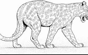 Snow Leopard Coloring Sheet Coloring Pages Print Coloring