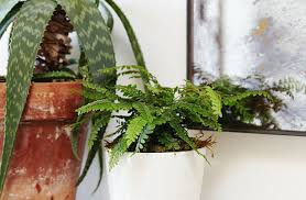 plant : Indoor House Plants Low Light Amiable Very Low Light ...